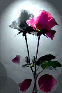 Rose, Schatten, Digitale kunst
