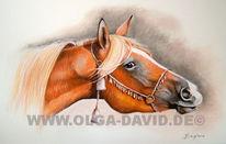 Pferde, Pastellmalerei, Pferdekopf, Araber