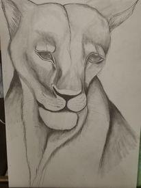 Löwin, Traurig, Zeichnungen, Zerbrechlich