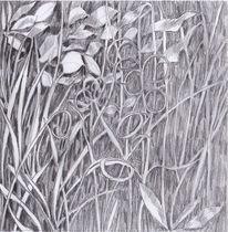 Pflanzen, Natur, Zeichnung, Bleistiftzeichnung
