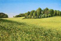 Landschaft, Gelb, Raps, Malerei