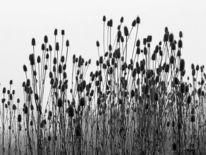 Landschaft, Distel, Nebel, Fotografie