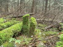 Vergänglichkeit, Wald, Temporär, Fotografie