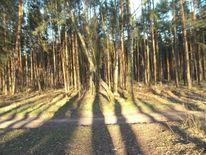 Wald, Schatten, Digitale kunst, Digital