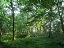 Rangsdorf, Erle, Uferwald, Rangsdorfer see
