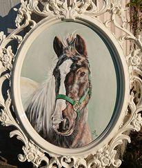 Portrait, Aurora, Connemara, Pferde