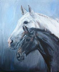 Fohlen, Portrait, Schimmel, Pferde