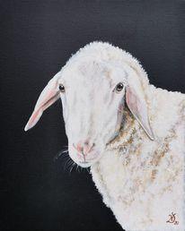 Bauernhof, Schaf, Lamm, Unschuldslamm