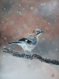 Schnee, Vogel, Schneeflocken, Eichelhäher