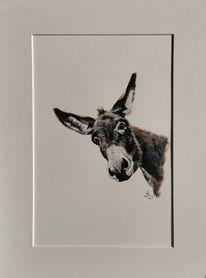 Esel, Portrait, Bauernhoftiere, Malerei