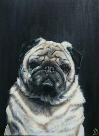 Hund, Mops, Portrait, Gizmo