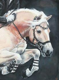 Pferde, Championat, Springreiten, Haflinger