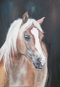 Pferdekopf, Pferde, Haflinger, Malerei