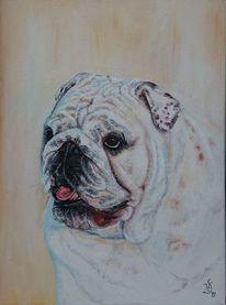 Hundeportrait, Weiß, Hund, Bulldogge