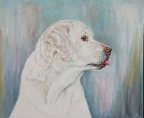 Portrait, Zunge, Hund, Hundekopf