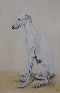 Whippet, Hund, Greyhound, Windhund