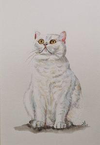 Katze, Kater, Britischkurzhaar, Aquarell