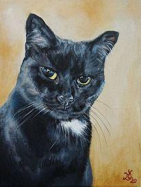 Kater, Katze, Katzenportrait, Malerei