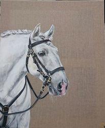 Pferdekopf, Weiß, Barocker trensenzaum, Pferde