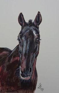 Feolito, Pony, Pferde, Polopony
