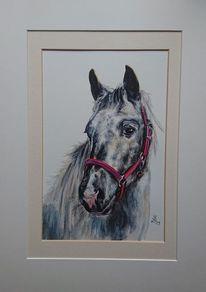 Pferde, Connemara, Schimmel, Pony