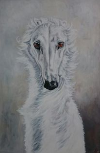 Weiß, Windhund, Hund, Augen