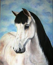 Spanier, Pferde, Weiß, Malerei