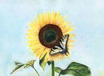 Sonnenblumen, Schmetterling, Schwalbenschwanz, Malerei