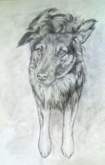 Haustier, Hundeblick, Hund, Malerei