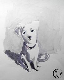 Weiß, Malen, Nordfrieland, Hund