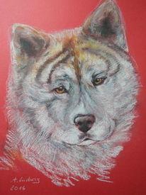 Hund, Akita inu, Zeichnung, Zeichnungen