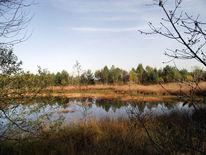Moor, Naturschutzgebiet, Herbst, Fotografie