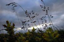 Wolken, Gras, Himmel, Natur