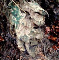 Natur, Gesicht, Holzkopf, Wurzel