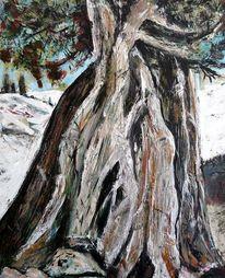 Landschaft, Baum, Rinde, Stamm