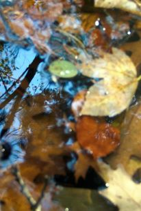 Interpretation, Blätter, Szene, Wasserspiegel