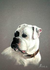 Hundebilder, Pastellmalerei, Boxer, Hundeportrait