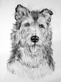 Zeichnung, Bleistiftzeichnung, Hundeportrait, Hundezeichnung
