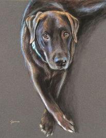 Portrait, Hund, Pastellmalerei, Labrador