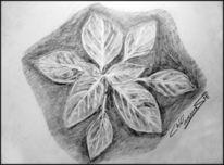 Bleistiftzeichnung, Zeichnung, Chili, Jungpflanze