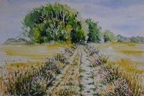 Feldweg mit getreide, Aquarell auf papier, Sommer, Schöne sommerlandschaft