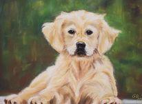 Hundeportrait, Zeichnungen, Hund