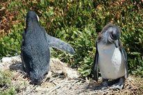 Urlaub, Pinguin, Fotografie