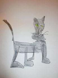 Katze, Tiere, Blindportrait, Zeichnungen