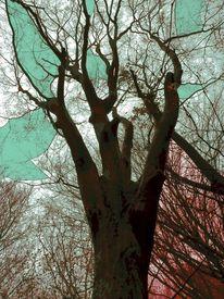 Zweig, Kontrast, Rot, Wahrnehmung