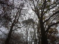 November, Baum, Fotografie, Novemberwald