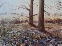 Baum, Morgen, Wald, Gegenlicht