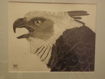 Affenadler, Harpyie, Greif, Zeichnungen