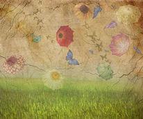 Blumen, Himmel, Fotografie, Gras