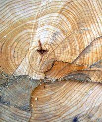 Ästhetik, Gefällten baumes, Baum, Struktur
